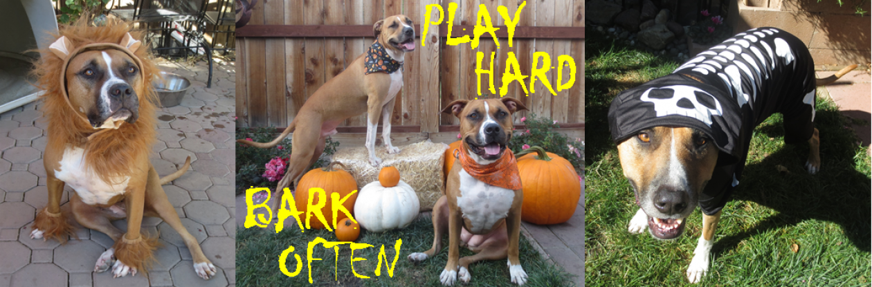 Play Hard, Bark Often