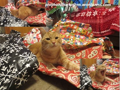12 Paws Unwrapping