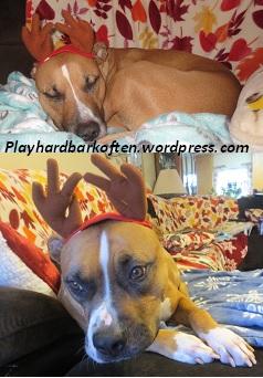 Four Reindeer Antlers