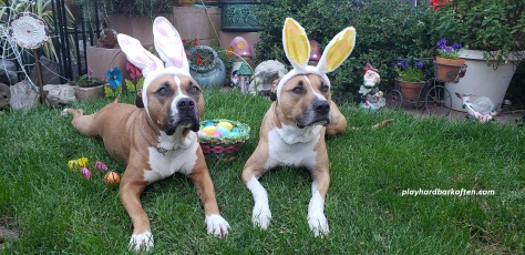 Easter Dogs 2019(1)